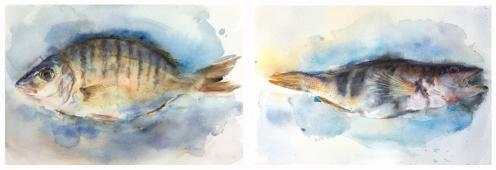 wendyartin-flatfishrainbowfish
