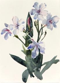 """Wendy Artin, Oleander, 7""""x9"""", 2016"""
