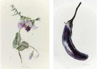 Wendy Artin, Wild pea, 14 x 20 cm, watercolor, 2017 - Eggplant, 16 x 25 cm, watercolor, 2018