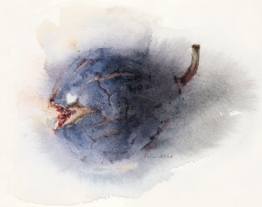 Wendy Artin, Barely Open Fig, 13 x 15 cm, watercolor on Arches, 2020